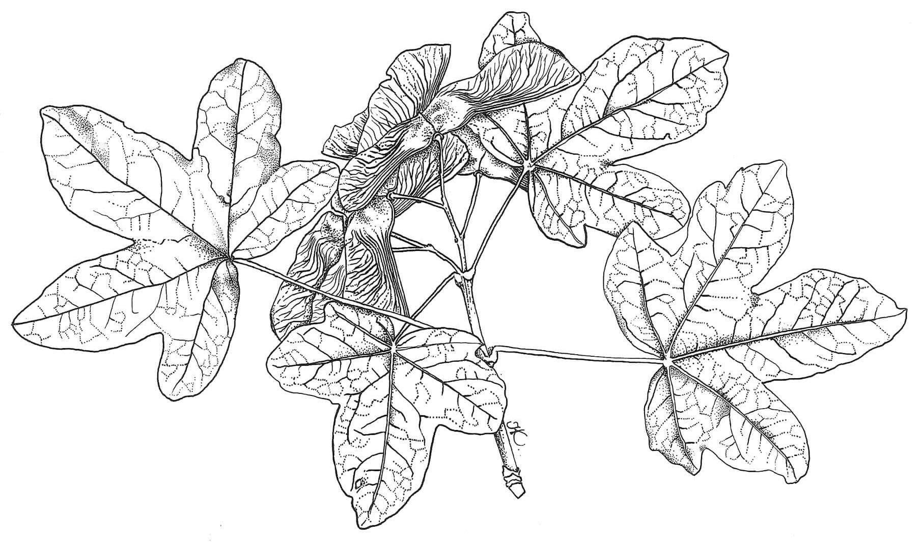 Z Dergisi Kultur Sanat Sehir Mevsimlik Tematik Dergi Bitki